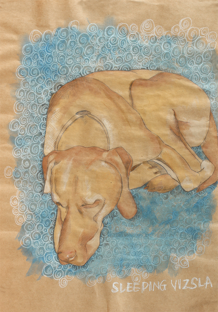drawing of a sleeping Vizla