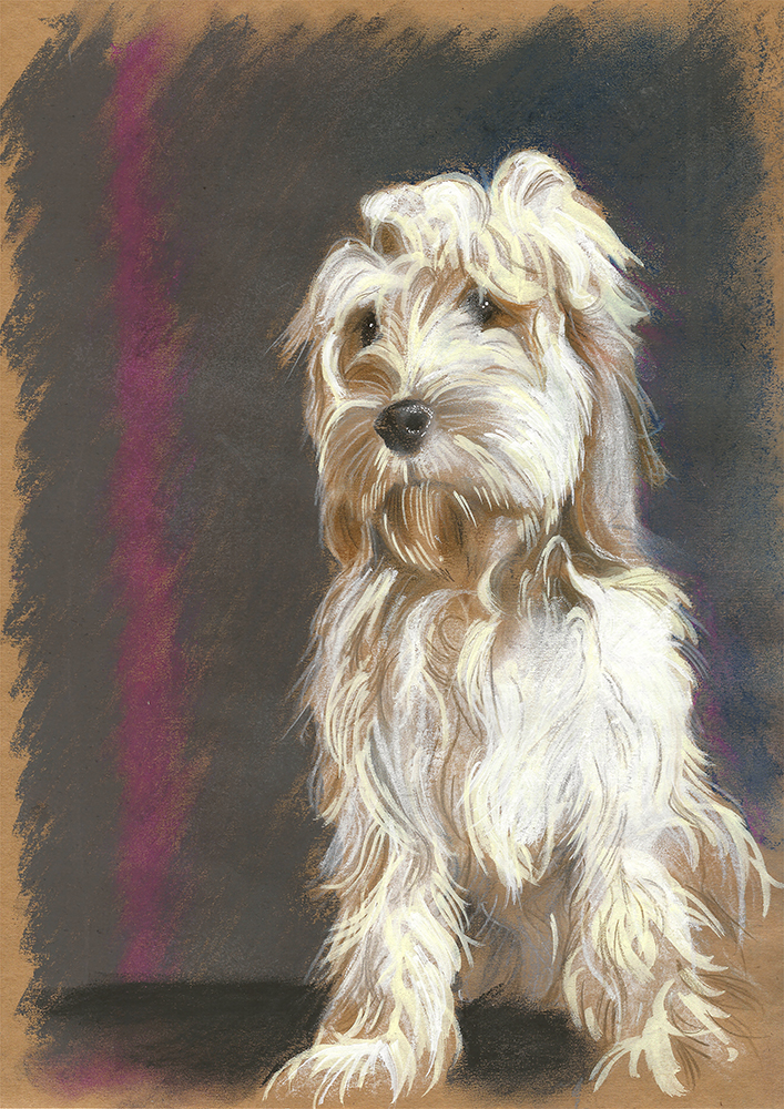 mixed media of a blonde cockapoo dog